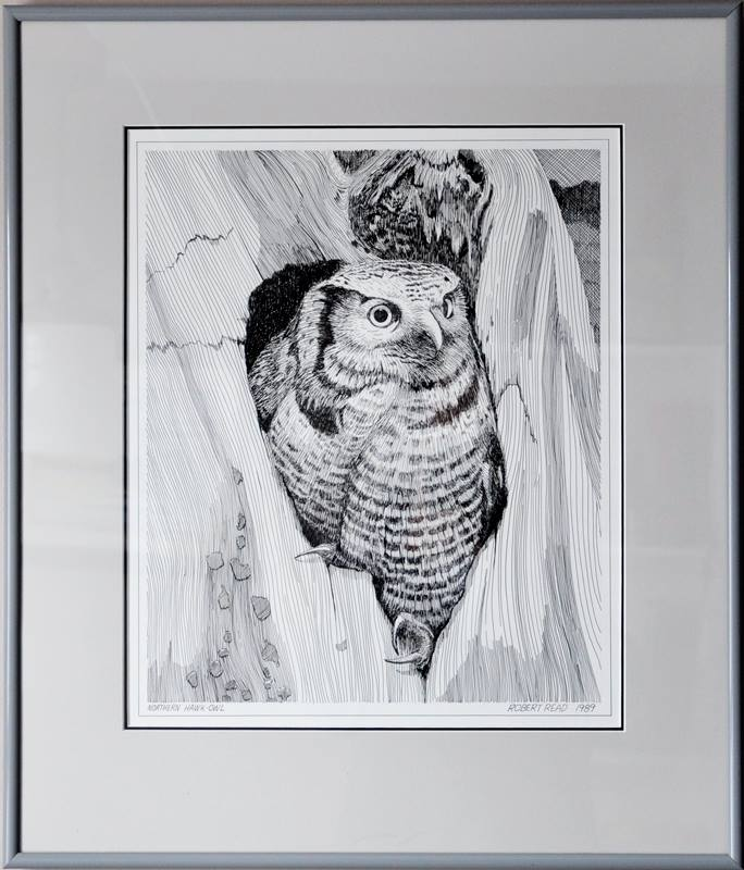 Northern Hawk Owl, Pen & Ink, $75.00